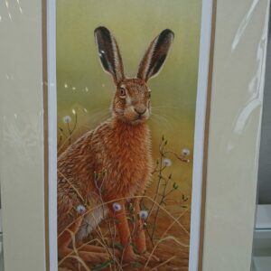Hare in Mayweed